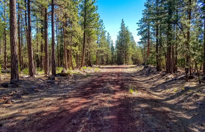 Premium Wooded Residential Vacation Cabin Lot in California Pines