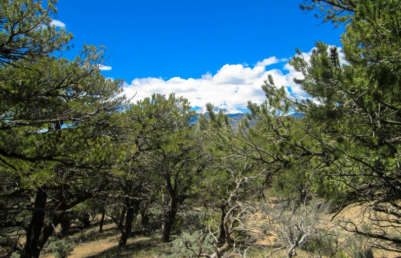 Breathtaking Mountain Treed Land w/ Creek in the Foothills of SDCR