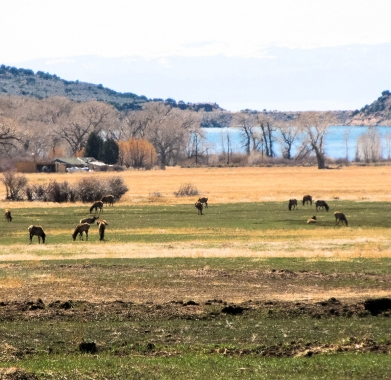 nearby elk by Mountain Home reservoir 3.5 away